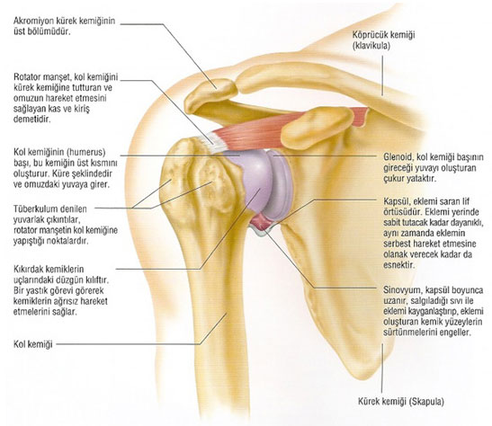 Humeral pain